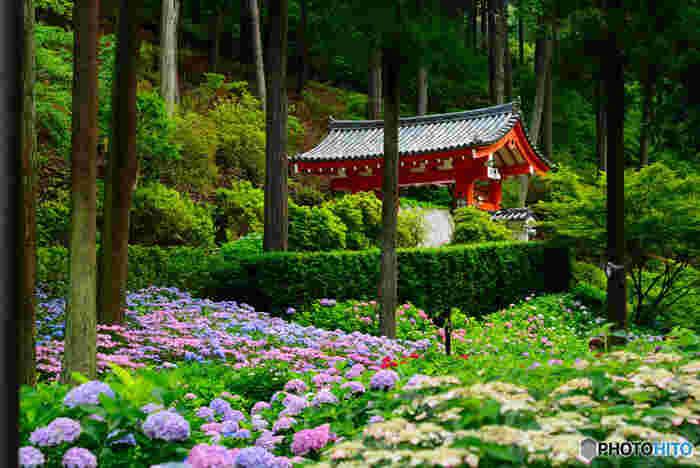 京都府宇治市にある三室戸寺は、8世紀に建立された寺院です。約5000坪の敷地を誇る大庭園には、四季折々で美しい花が咲き誇るため、三室戸寺は「花の寺」とも呼ばれています。