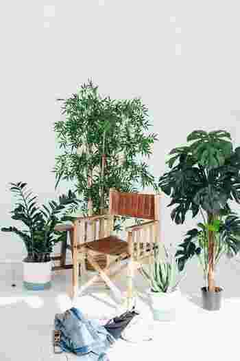 日中でもあまり日光が入らない玄関の場合には、日陰や半日陰でも元気に育つ耐陰性・耐寒性に強い植物がおすすめです。以下の代表的な観葉植物を参考に、お気に入りのものを探してみてくださいね。
