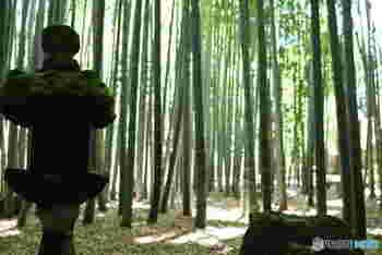報国寺までのアクセスは鎌倉駅東口から鶴岡八幡宮方面へ歩き、そのまま金沢街道をすたすた歩く、約40分のお散歩コース。