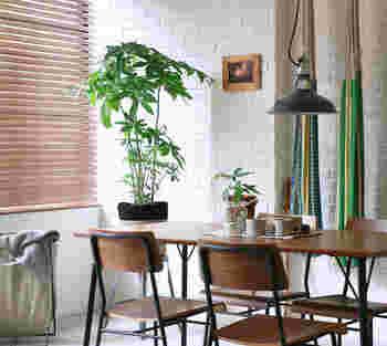 害虫にも乾燥にも強いパキラ。 手のような大きな葉っぱは、北欧系のインテリアと相性が良いです。 リビングにも、キッチンにもおすすめの植物。