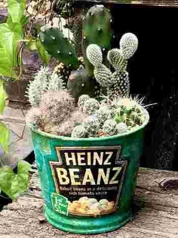 種類の多いサボテンは、違ったタイプのものを寄せ植えするのもおすすめ。コツは、玉や柱などさまざまな形状のものや、花やトゲに特徴のあるものなど組み合わせてメリハリをつけること。また、縦長のものを後ろに、丸形を前にもってくると奥行きが出ます。
