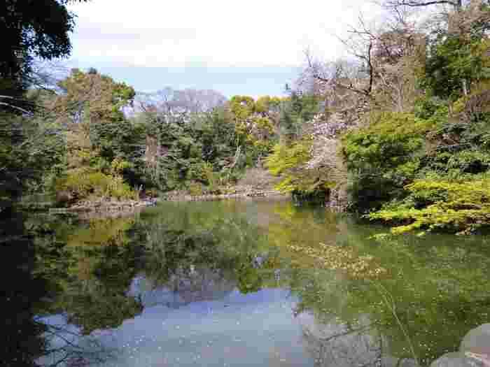 夏目漱石の小説「三四郎」の舞台になった池が、東京大学の本郷キャンパスにあります。ここは江戸時代には加賀藩上屋敷だった場所で正式名は「育徳園心字池」ですが、小説の影響で「三四郎池」と呼ばれるようになりました。