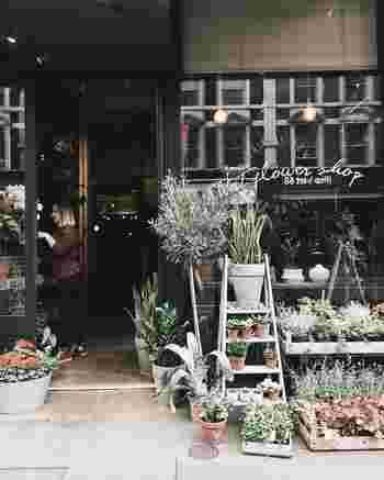 """おしゃれなインテリアとして玄関を素敵に演出してくれる「観葉植物」は、風水では幸運を呼び込む重要な""""開運アイテム""""として大切にされています。 しかし観葉植物と一口に言っても種類がたくさんあり、植物によって風水効果も様々です。 どのような観葉植物が運気UPにつながるのか、それぞれの風水効果と合わせながら見ていきましょう。"""
