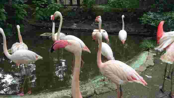 「とりたちのらくえん」では、フラミンゴやホロホロ鳥などの鳥類がいるゲージの中に入れます。触れる距離で観察できるなんて、ちょっとワクワクしますね。