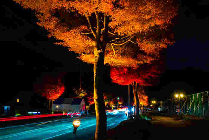 毎年秋になると「富士河口湖紅葉まつり」が開催され多くの人で賑わいます。ライトアップは午後10時まで行われており幻想的な紅の世界が楽しめます。この時期の河口湖はとても寒いので防寒対策をしっかりしてお出かけください。