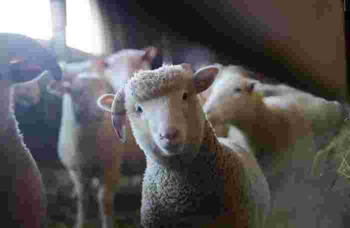 使われている毛糸や綿糸は、すべてオーガニック。手編みならではあたたかさはもちろん、素材の優しさもうれしいですよね。