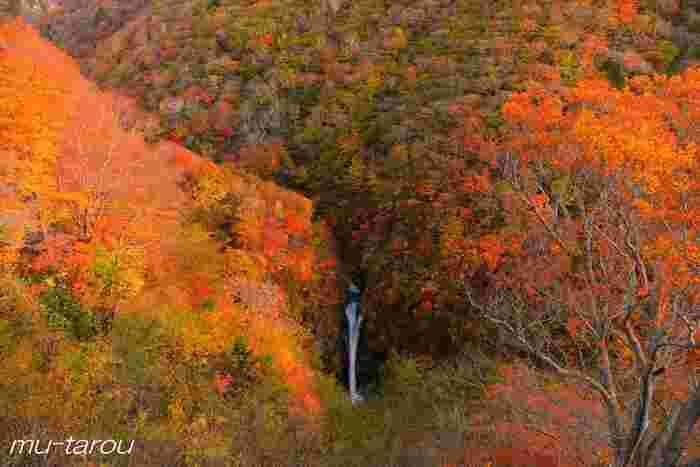 「那須平成の森」の敷地内にある駒止の滝。高さ20mの迫力ある滝と、燃えるような紅葉のコントラストを楽しめます。色彩や滝の音、自然の香りなど、五感を刺激されるひと時を過ごせますよ。