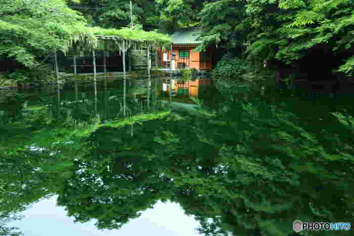 富士山の伏流水が湧き出している特別天然記念物の湧玉池は、木々に囲まれた神秘的な空間。春にはしだれ桜が咲き誇り、5月には迫力満点の流鏑馬祭りが開かれます。