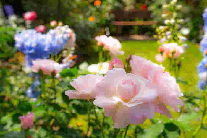 """会場は、""""花のまちづくりの推進拠点""""である「フローランテ宮崎」という植物公園です。ですので、昼間は四季折々のお花や植物を見物することもできますよ♪"""