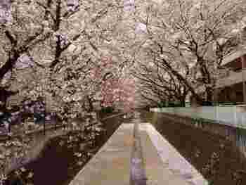 お店の裏に流れている麻生川は、桜の名所でもあります。桜の季節には、こちらのパンをいただきながらお花見をするのもいいですね♪