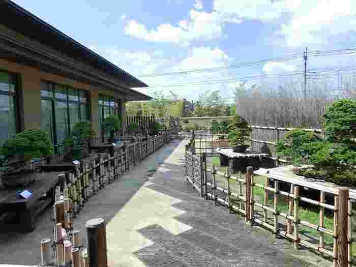 盆栽は日本の伝統的芸術。盆栽美術館は、盆栽の名品や優品などが鑑賞できる他、植木鉢、盆器、鑑賞石、盆栽にまつわる浮世絵、盆栽の歴史など幅広く盆栽について触れることができます。