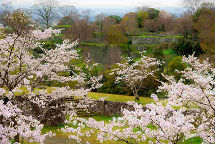 かつては難攻不落の山城として名を馳せた岡城は、滝廉太郎が作曲した普及の名曲「荒城の月」の舞台です。12世紀初頭に築城され、悠久の時を経た今、遺構のみが残る岡城址には約1500本の桜が植樹されています。