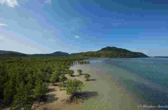 亜熱帯性気候の西表島では、イリオモテヤマネコをはじめ、珍しい動植物がたくさん生息しています。そのため、「東洋のガラパゴス」とも呼ばれています。