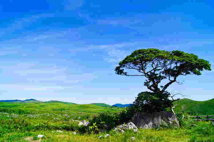 緑の平原に顔をだす白い石灰岩は、「カレンフェルト(羊の群れ)」と呼ばれています。本当に草原に群れる羊のようですね。