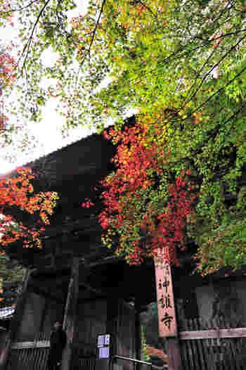 大階段を登りきると、神護寺境内へと続く山門があります。秋色に染まったモミジの葉が、神護寺山門が持つ荘厳で静謐な雰囲気に彩りを与えています。
