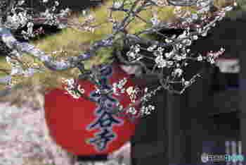 梅の花が咲き始め、暖かい日差しを感じる日が増えた3月の鎌倉へ、足を運んでみませんか。  今回ご提案したいのは、ノスタルジックな気分を楽しめる鎌倉散策。
