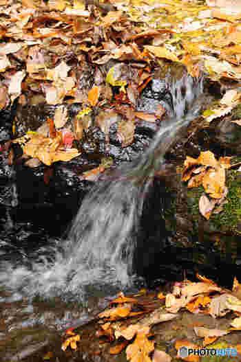 水の流れと落ち葉、豊かな自然に心なごみます。