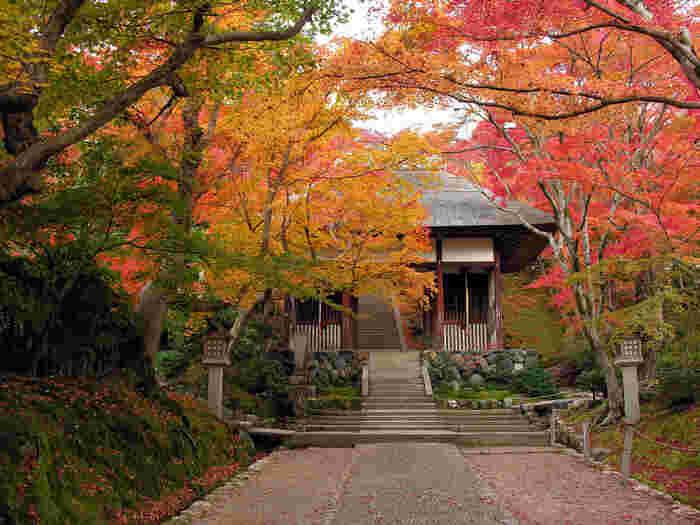 「常寂光寺」のハイライトの一つ檜皮葺(ひわだぶき)の「仁王門」。元々「本圀寺」客殿の南門として建立されたものを移築したものです。