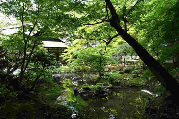 深い樹林で包まれた静かな曹源池を眺めていると、かつて離宮であった面影を感じることができます。南禅院へ一歩足を踏み入れると幽玄閑寂な世界が広がっており、古い日本絵画の中に迷い込んだような気分を覚えることでしょう。