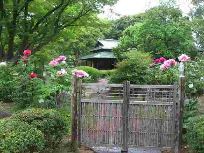 第三の魅力は、旧江戸城の遺構や日本庭園、茶屋や櫓といった歴史的建造物が、豊かな自然環境の中にしっとりと溶け込んで、洗練された景色を育んでいること。  【牡丹咲く4月下旬の『諏訪の茶屋』。 美しい屋根が印象的な「諏訪の茶屋」は、かつて吹上御苑内にあった茶室を明治45年に再建したもの。東御苑の整備の際に、吹上地区内から移築された。内部の見学は不可だが、風雅な茶室風建物は、周囲の景色と溶け合い、季節季節で異なる雰囲気が楽しめる。ツツジやサツキが咲き揃う初夏の頃は、華やかで苑内人気のスポットとなる。】