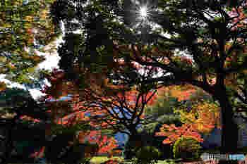 ボートにのって不忍池から高層ビル街を望むもよし。朝の公園を深呼吸しながら散歩するもよし。公園内のカフェでのんびりゆたかな緑を楽しむもよし・・・どの季節も、どの時間帯もそれぞれの表情を見せ、違った魅力を持つ素敵な公園です。
