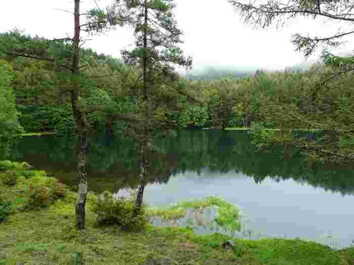 諏訪大社に伝わる牝鹿を射る神事(御射山御狩神事)があったことが由来とされています。強い酸性なので魚は生息していませんが、湖の底には酸性水を好むチャツボミ苔が繁茂していて、湖面をより美しい緑色に見せているそう。池の周りの遊歩道をゆっくり散策すると、角度によって変わる湖面を楽しむことができますよ。
