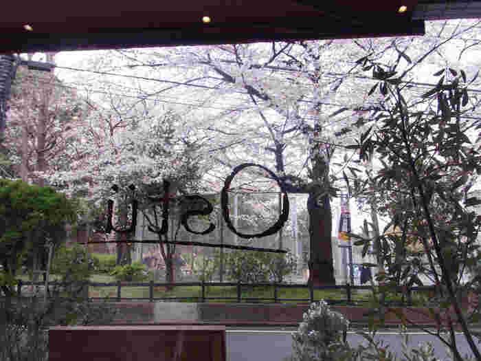 美味しいビエモンテ料理を楽しみながら目の前には立派な桜の木。代々木公園や駅からも近いので散歩の合間に訪れるにはぴったり。