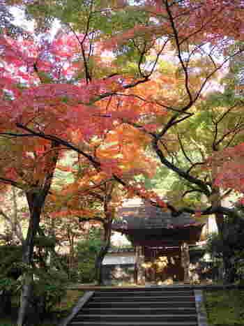 樹々に囲まれた「居士林(こじりん)」では、学生坐禅会、土日坐禅会などが定期的に開かれています。 円覚寺では、写経や座禅は予約不要で体験できます。静謐な空間で、自分自信を振る時間を持ちたいですね。