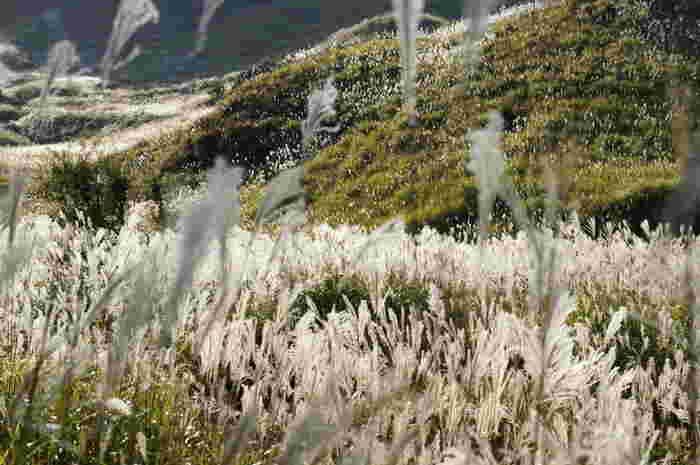 映画のメインロケ地となったのは、姫路の北、播但線寺前駅から車で40分ほどかかる砥峰(とのみね)高原。西日本有数広さを誇るススキの草原が印象的な高原は、県立自然公園に指定されています。  果たしてこれは日本なのか?むしろ、現実世界なのかどうか?と思えるほどの幻想的な風景なしには、あの小説の世界観を表現できなかったであろう・・・そんな思いを抱くはず。  映画のシーンなくしても、その美しい風景を目の当たりにするだけで、心震える感動を味わえる場所です。