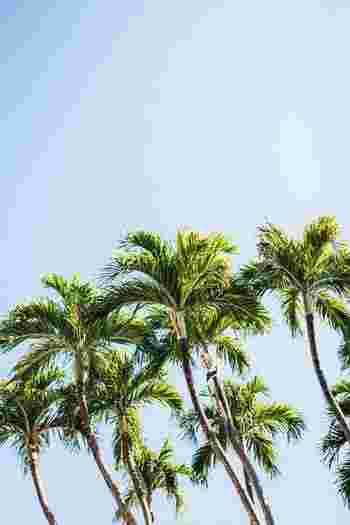 南国を思わせる、バニラとココナッツの甘い香りは夏にぴったり。トロピカルムードを楽しみましょう。