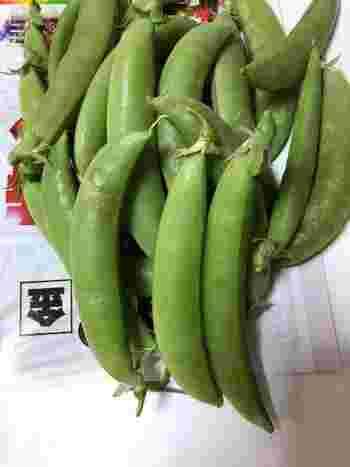 アメリカからやってきたといわれる「スナップえんどう」は、さやが厚く、豆が丸くなるまでしっかり成長させたものを食します。こちらはさやごと食べたり、豆だけを取り出して、グリーンピースのように調理することも。