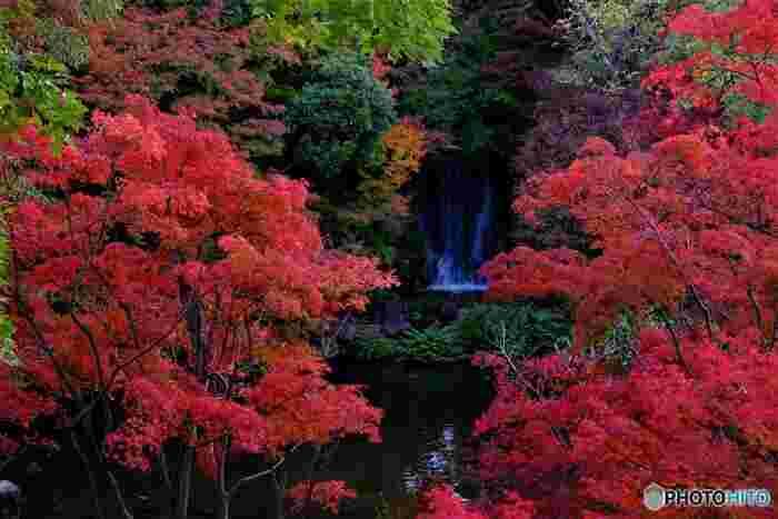 日本庭園には、深紅に染まったモミジに囲まれた美しい滝もあります。心地よい滝のせせらぎに耳を澄ませながら、絵画のように素晴らしい風景を眺めながら、贅沢なひとときを過ごしてみてはいかがでしょうか。