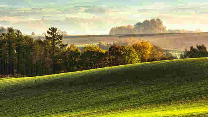 朝霧につつまれ、一幅の絵画のような美瑛の朝焼け。奥にはまるで別世界のように大地が広がっています。