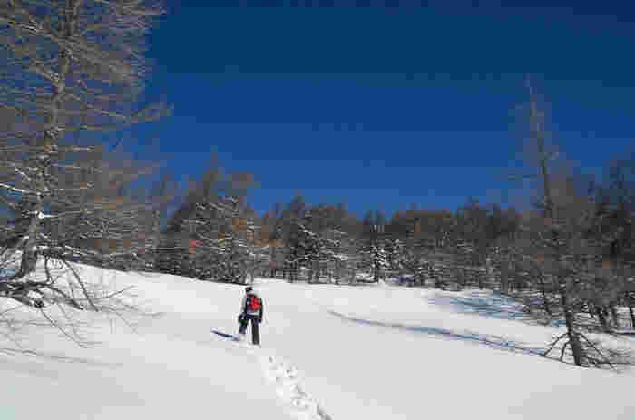 スノーシューを履いて、冬の野山をゆったりとトレッキング。ツアーに参加することで、初心者でも安心して山歩きができます。インストラクターからさまざまな自然や植物、動物などに関する知識などを聞くこともできます。