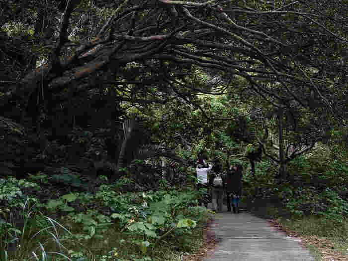 """那覇空港から車で約30分に位置する「ガンガラーの谷」。観光スポット""""おきなわワールド""""の向かいにあるので、初めての方も探しやすいかと思います。元は鍾乳洞だった場所が崩れて出来上がった森です。太古の息吹を感じる、自然豊かな亜熱帯の森を散策するツアーはいかがですか?鍾乳洞にそのまま造った「ケイブカフェ」もおすすめです。"""