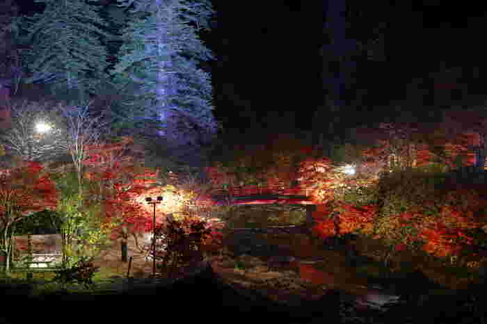 10月中旬から11月上旬にかけて、紅葉の夜間ライトアップが行われます。妖艶に浮かび上がった紅葉の美しさは圧巻で、思わず息をのみますよ。