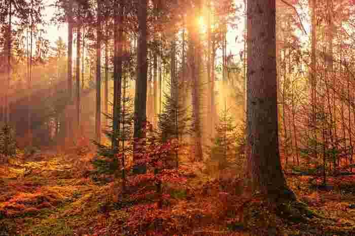 洋服を衣替えするように、インテリアにも季節感を意識すると暮らしがより豊かになります。インテリアはいつも同じ…という方は、季節の変わり目を機会に「初秋」をインテリアに取り込んでみませんか。
