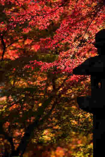 いかがでしたか?紅葉の見頃は天候や気温によって左右されるので、お出かけの前に公式HPや観光協会で調べてみると確実です。せっかくなら日中だけでなく、ライトアップされる夜の紅葉も楽しみましょう!福岡・佐賀・大分の紅葉スポットで、この時期ならではの美しさを満喫してみてくださいね♪