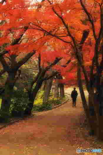 源氏山公園からは北鎌倉に抜ける山道や、鎌倉ハイキングコースの中継地点でもあり、途中の銭洗弁天の坂道もとっても急です。こちらの界隈に行かれる方はスニーカーなど歩きやすい靴で訪れてくださいね。