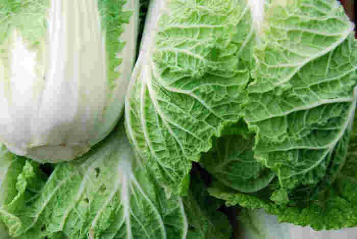 冬の料理に欠かせない白菜は、これから寒くなる時期に真っ先に植えたい野菜です。土は深くしっかりと耕し、肥料も多めに混ぜておきましょう。こちらもキャベツ同様肥沃な土が適しているので、追肥は2週間に1回を目安に与えてくださいね。