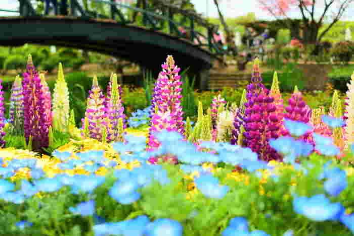 園内にはチューリップやユキヤナギ、早咲きの西洋シャクナゲなど色とりどりのお花が目を楽しませてくれます。群馬県と栃木県の県境に位置し、少し足を伸ばせば有名な温泉地もありますので、ドライブがてら訪れるのも楽しそうですね。