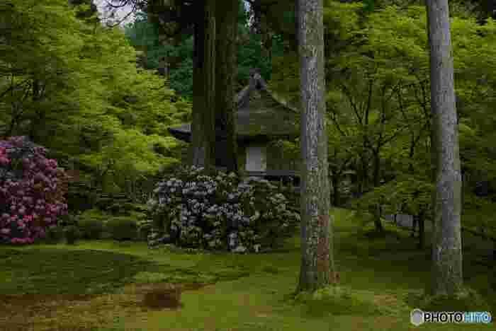 深い森と緑の苔に覆われた有清園の庭園は深山幽谷とした雰囲気が漂っており、訪れる人々を魅了してやみません。