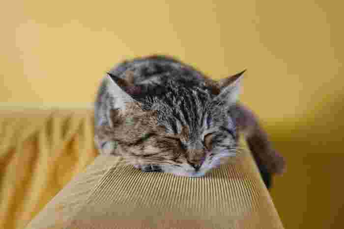 愛する家族の一員、猫ちゃんの健康を守るために、こまめな毛玉のお手入れが大切です。