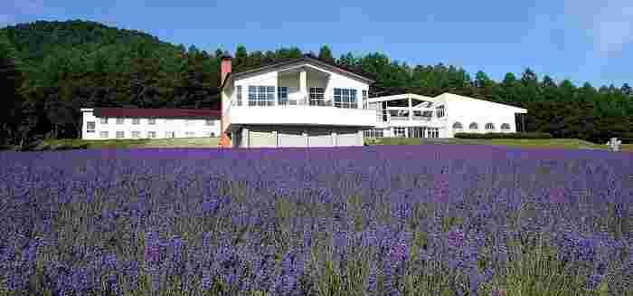7月中旬~8月は、市内最大規模のラベンダー畑に出会えます。まるで絵本の中の世界のような紫の絨毯は圧巻。