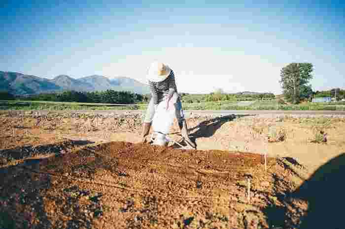 現在は自宅と店舗のすぐ近くに畑を借りて、喫茶で出す野菜やエディブルフラワーなどを育てています(画像提供:パンと日用品の店 わざわざ)