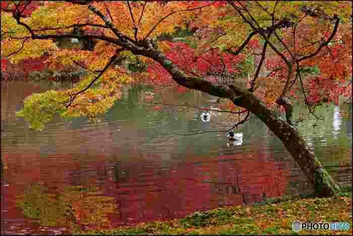 京都府立植物園は、京都の中でも特にゆっくりと紅葉を味わうことができるスポットです。神社や寺院と紅葉の組み合わせではありませんが、混雑を避けて秋を楽しむにはぴったりです。