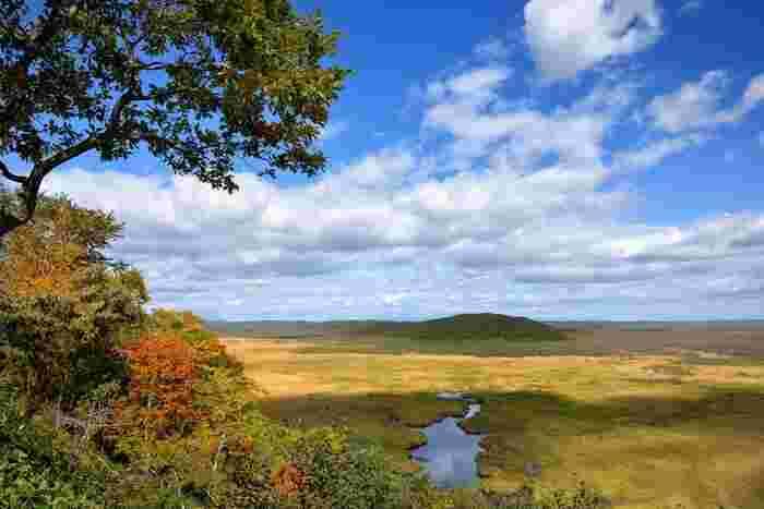ここが日本だとは信じられないほど広大な釧路湿原にある展望台の1つ「コッタロ湿原展望台」。そこからの眺めは、ご覧の通り胸がすくよう。運がよければ、野生の丹頂鶴も見られるかもしれません。