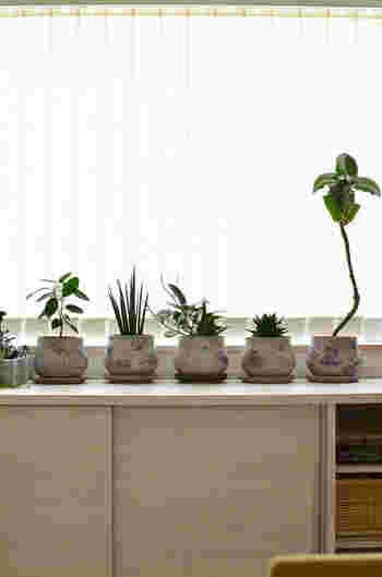 同じプランターを使ってさまざまな植物を育てると、統一感が生まれておしゃれなグリーンコーナーを作ることができます。こちらはセメント製のプランターで、無機質な感じが植物をよりイキイキと見せてくれます。