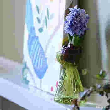 約3~4ヶ月後に花が咲き、その後1ヶ月の間ほど花と香りが楽しめます。