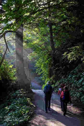 次にご紹介するのは、河童橋をスタート地点にして気持ちの良い木々の中を歩き、明神池で引き返してくるコースです。大正池コースと組み合わせて4時間程度のコースにするのもおすすめですよ。  河童橋→明神橋→明神池→河童橋(歩行時間 約2時間)